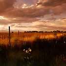 Colorado Farm Land by Pamela Hubbard