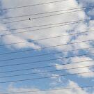 Bird on a Wire by Larry Llewellyn