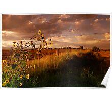 Colorado Farm Land III Poster