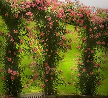 The Rose Arbor by Mike  Savad