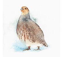 Partridge Photographic Print