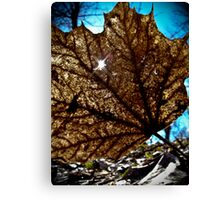 Light Shining Through Canvas Print