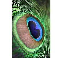 Peacock Feather Photographic Print