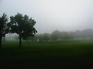 Foggy Morning in the Park by Leanna Lomanski
