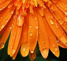 Orange Mist II by Donna Adamski