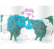 Belted Galloway Cows Poster