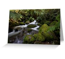 A Glimpse of Sun at the Rainforest Gallery Greeting Card