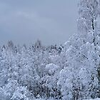 Winter in Norway by julie08