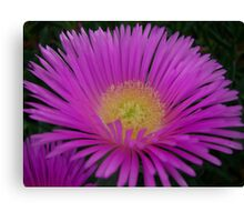 Soft and Pretty Canvas Print