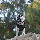 Dog on a hill by disorder