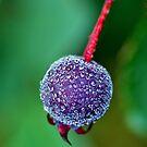 Purple Dew by Bill Morgenstern
