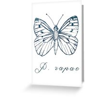 Pieridae Rapae Greeting Card