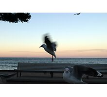 Freaky Seagull Photographic Print