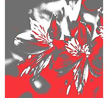 Homescape - grey and red orchid 2 Photographic Print