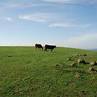 Moo Cows by Blurto