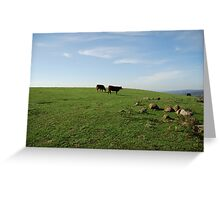 Moo Cows Greeting Card