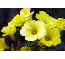 Sour Bouquet Photographic Print
