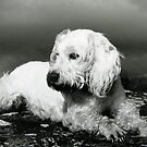 A Faithful Friend by Mike Paget
