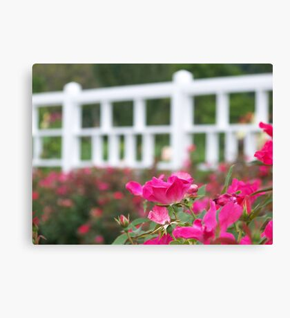 The White Fence Canvas Print
