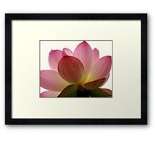 Beneath the Lotus Framed Print