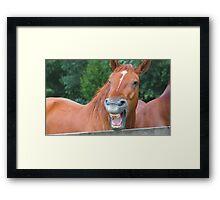 Horse humour........ Framed Print