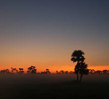 Cabbage Palm Sunrise by James Adams