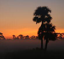 Cabbage Palm Sunrise II by James Adams
