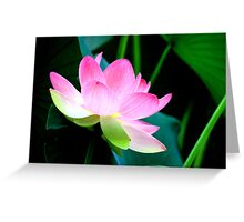 The Last Lotus Greeting Card