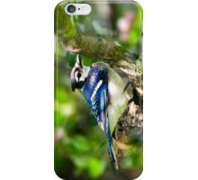 Spring Blue Jay iPhone Case/Skin