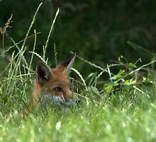 Hide and Seek by robspics