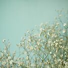 Baby Blue by Cassia