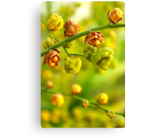 Foliage background Canvas Print