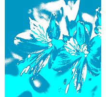 Homescape - blue and white orchid 2 Photographic Print