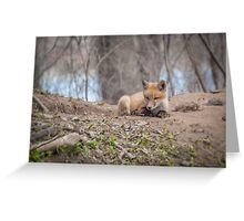 Kit Fox 2011-2   Greeting Card