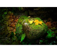 Leafs on Rock Photographic Print