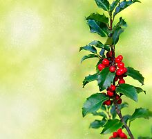 Holly Branch  by ccaetano