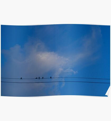 Summer Birds Poster