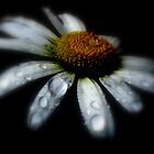 Daisy by shelbu94