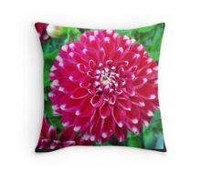 Soft red petals of Dahlia Throw Pillow