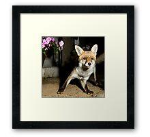 Paparazzi Snap Fox!  Framed Print