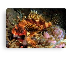 Dwarf Lionfish Canvas Print