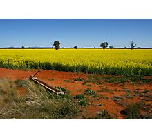 Spring Crop Photographic Print