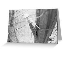 Electric Fence on a Dairy Farm Greeting Card