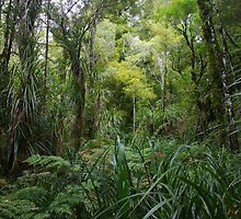 Waipoua Forest by lezvee