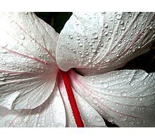 Raining .... Photographic Print