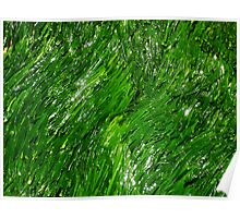 Bright Green Seaweed - Life in and around rockpools Poster