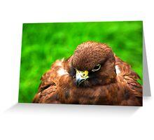 Gyr Falcon Greeting Card