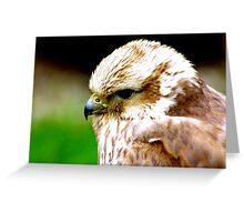 Saker Falcon Greeting Card