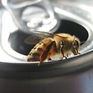 Bee on my Can by hallucingenic