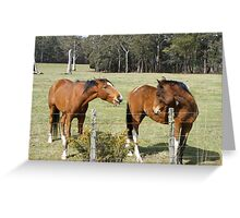 back chatting horses  Greeting Card
